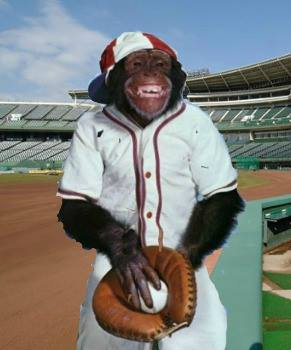 Chimpanzees can't watch a baseball game, even standing on third base.
