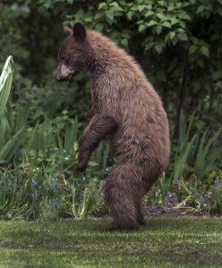2014-0525-bear_0854