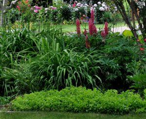 20120622_20130623-garden_2668ed.jpg