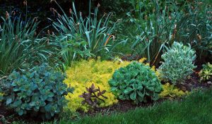 2012Jun01_June Gardens_6970-sedum.jpg