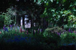 2012Jun10_garden_7100ed.jpg